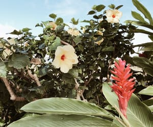 flowers, hawaii, and travel image