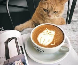 animals, cat, and coffee image