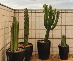 aesthetics, cacti, and cactus image