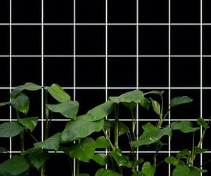 grid, aesthetic, and wallpaper image
