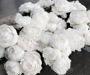 flowers and peonies beautiful white image