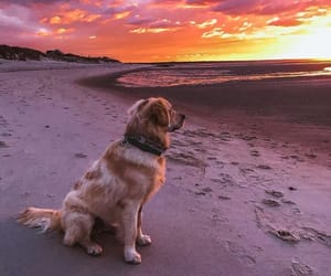 animal, dog, and beach image