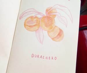 apricot, peachy, and sketch image