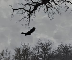 crow, dreary, and fallout image