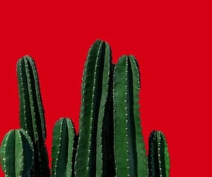 red, green, and cactus image