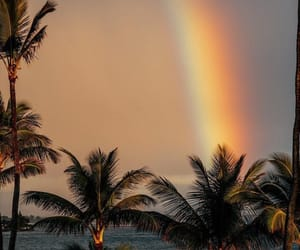 ocean, palm, and rainbow image