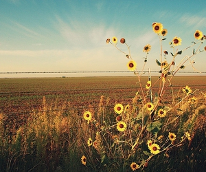 country, field, and flowers image