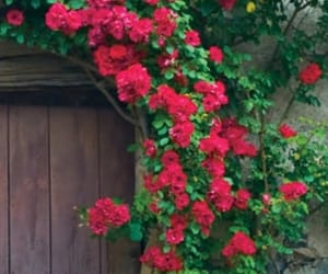 beautiful, door, and old house image