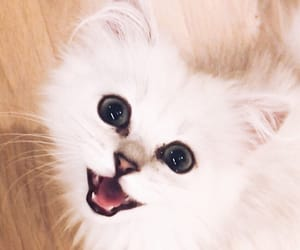 adorable, cat, and happy image