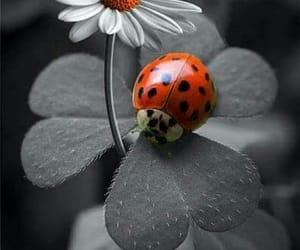 flor and naturaleza image