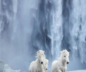 falls, horses, and love image