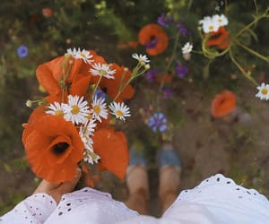 flowers, Wild Flowers, and spring image