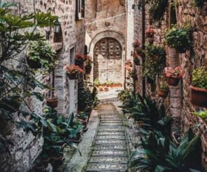 italy, photography, and plants image