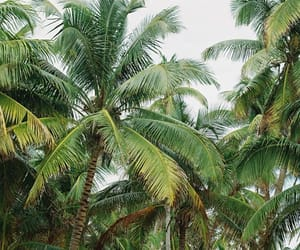 palm trees, green, and summer image