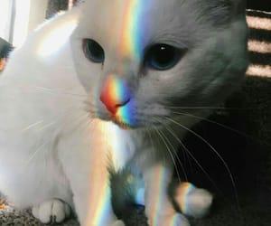 cat, animal, and rainbow image