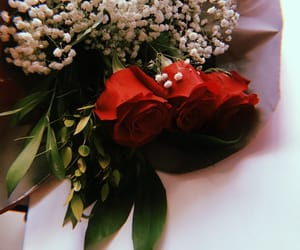 aesthetic, gift, and red rose image