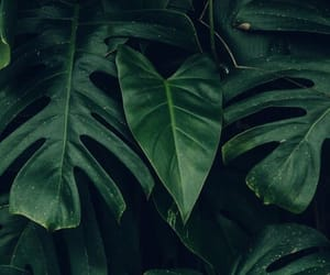 green, plants, and dark image