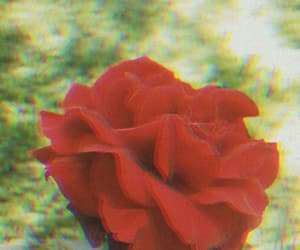 black, flower, and grunge image