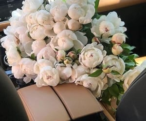 aesthetics, beige, and bouquet image