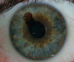 black, brown, and iris image
