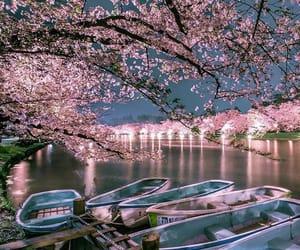 japan, oriental, and sakura image