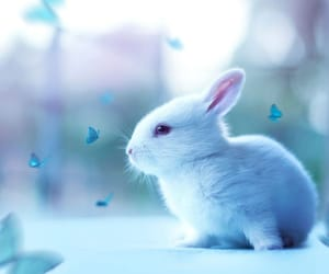 cute, animals, and blue image