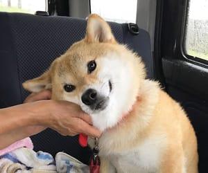 animals, cute dog, and dog image