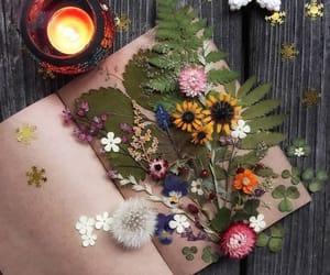 flores, inspiracion, and botánica image