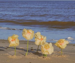 beach, florals, and ocean image