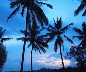 moon, palm trees, and tropical image