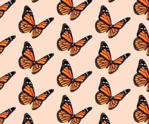 aesthetic, butterflies, and kawaii image