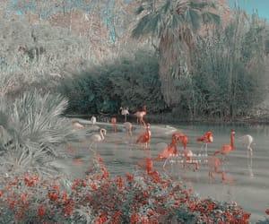 aesthetic, theme, and flamingo image