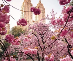 Central Park, nature, and pink image