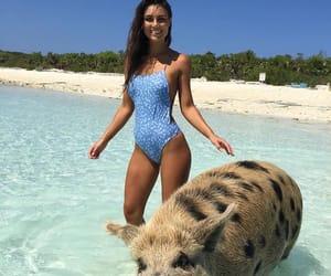 animal, beach, and fashion image