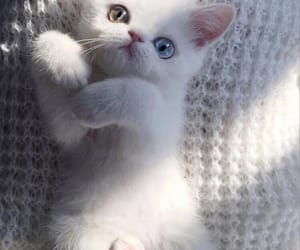 adorable, beautiful, and kittie image