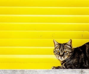 cats and yellow image