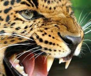 naturaleza, Animales, and tiger image