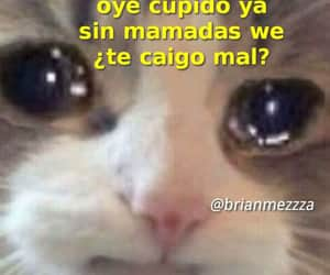 amor, memes, and Gatos image