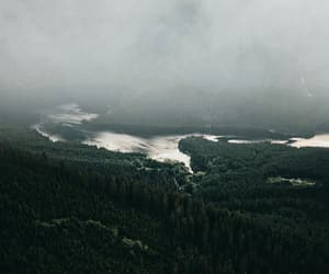 canada, fog, and forest image