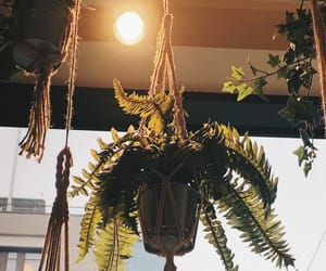aesthetic, hanging plant, and apartment image
