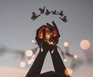 light, aesthetic, and butterfly image