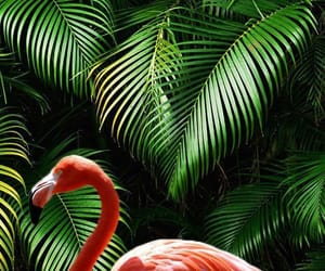 wallpaper, green, and flamingo image