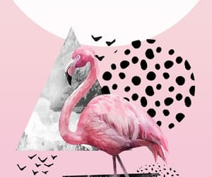 Animales, flamingo, and animals image