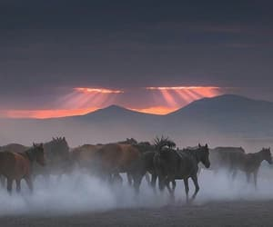 horse, mountain, and sky image