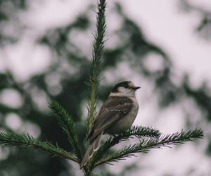 animals and bird image