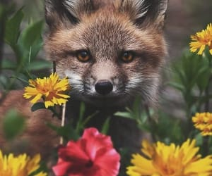 animals, fox, and flowers image