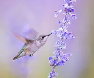 birds, photography, and flora image