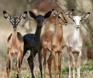 animals and deer image