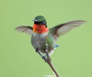 beautiful, nature, and bird image