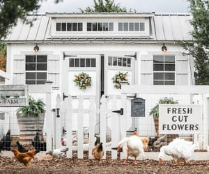 chickens, Coop, and country living image